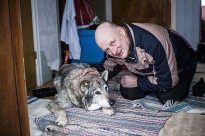 Vaarallinen tehtävä Tornionjoella – Pajalassa eläkepäiviään viettävä Jouni Puoskari huomasi koiran korvan liikahtavan, ja raadonhakureissu muuttui pelastustyöksi