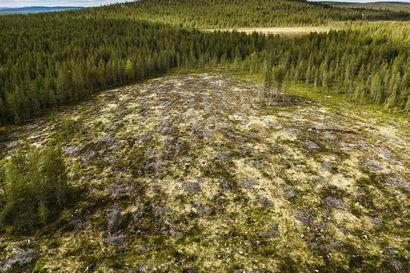 Tervetuloa metsätalousmetsään, kansanedustaja Pitko