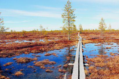 """Muhoksella sijaitseva Kivisuo sai päätöksen suojelusta – """"Kivisuo on luontoarvoiltaan erittäin arvokas suoalue"""""""