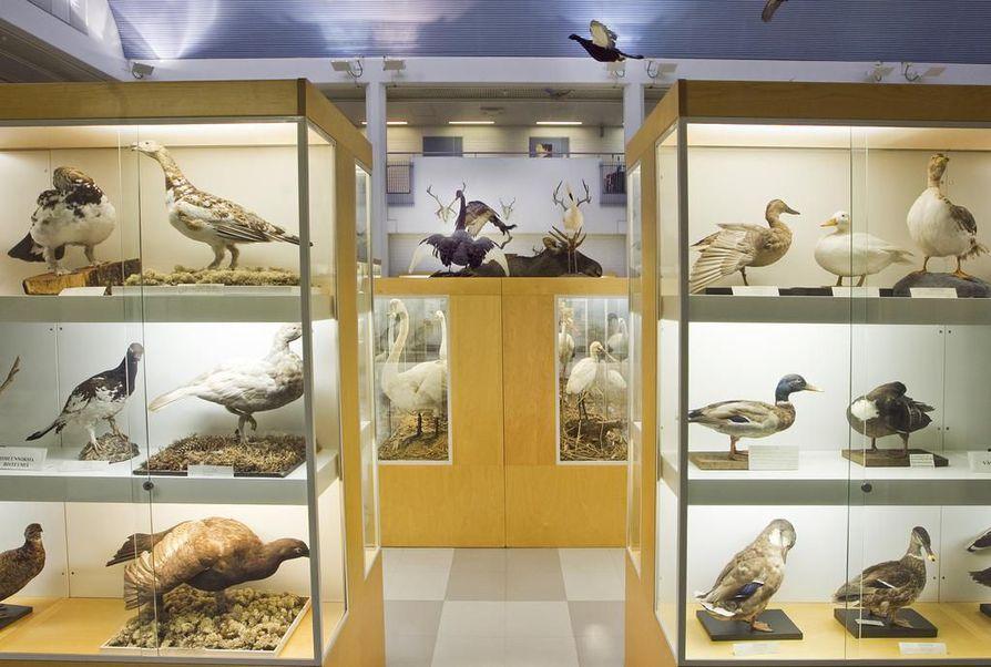 Oulun yliopiston eläinmuseo.