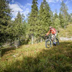 """""""Tänä päivänä metsissä liikkuvat pyöräilijät käyttävät näitä polkuja ja teitä, eikä siitä koitune kenellekään erityistä haittaa"""""""