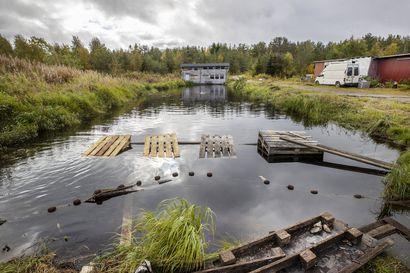 Ely-keskus päättää istutusvelvoitteen muuttamisesta –Taivalkoskelainen kalankasvattaja hakee lupaa istuttaa järvitaimenen sijaan kirjolohta