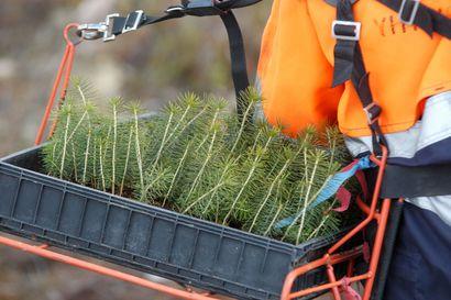 Metsittämisellä pyritään ilmastotavoitteisiin – Suomessa on paljon viljelykseen kelpaamatonta maata, jonka voisi laittaa kasvamaan puuta.