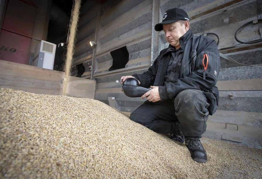 Maanviljelijä Ilkka Matinolli mittaa ohraa GrainSense-laitteella.