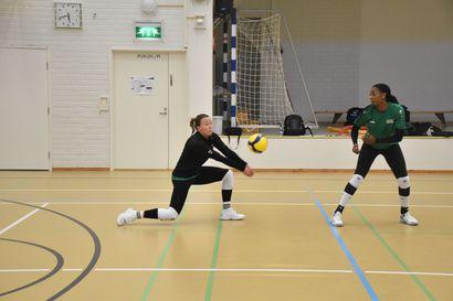 Hiomista ennen kuin mestaruusjahti alkaa – pohjoisen lentopallojoukkueet kohtaavat harjoitusotteluissa Kuusamossa