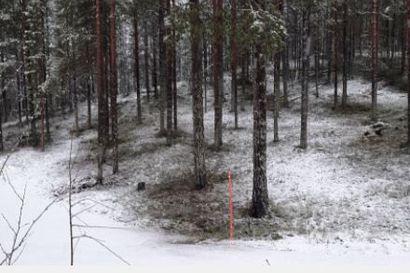 Lumen tulo jatkui osassa Lappia koko päivän – Kittilässä on jo melkein 20 sentin lumipeite