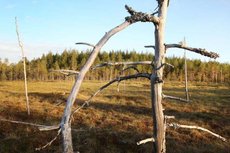 Tapahtumat Oulu