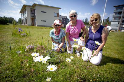 Koronamummut tekivät pörriäisille kukkaketjun kerrostaloalueelle