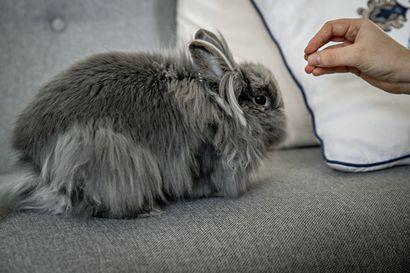 Suuri osa pienistä lemmikkieläimistä ei sovi lapsiperheeseen –Eläin kannattaa hankkia kasvattajalta, joka on opettanut sen poikasesta saakka ihmisen käsittelyyn