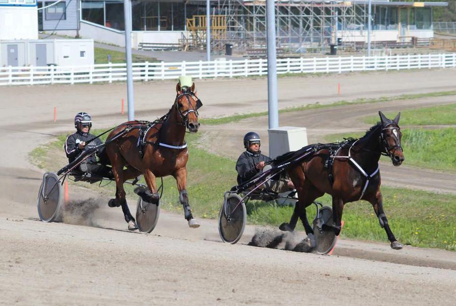 Elian Web (kuvassa oikealla) hiitillä Oulun raviradalla. Kirittäjänä 3-vuotias tallikaveri Enter Mayweather, rattaillaan Katja Melkko.