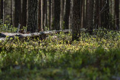 Metsähallitus esittelee teemapäivänä retkietikettiä Oulangan kansallispuistossa – rauhassa retkelle haluavan kannattaa suunnata kansallispuistoon varhain aamulla tai yöllä