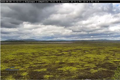 Suolive: Tästä voit seurata suorana Pelkosenniemen Kilpiaavan suon kesää
