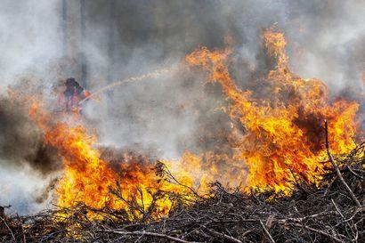 Luonnon monimuotoisuus kasvaa, kun kulotus luo tilaa uusille eliölajeille – Lapin yhteismetsä kulotti Tervolassa ensimmäistä kertaa omaa metsäänsä