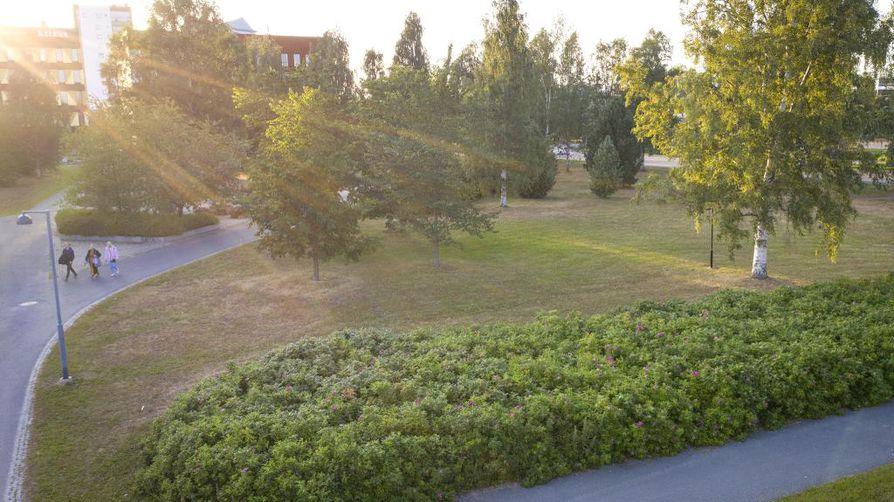 Kuiva heinäkuu on jättänyt jälkensä nurmikkoon