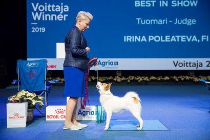Sodankyläläinen metsästyskoira Aivi yllätti kansainvälisen koiraväen ja tassutteli voittoon Suomen suurimmassa koiranäyttelyssä