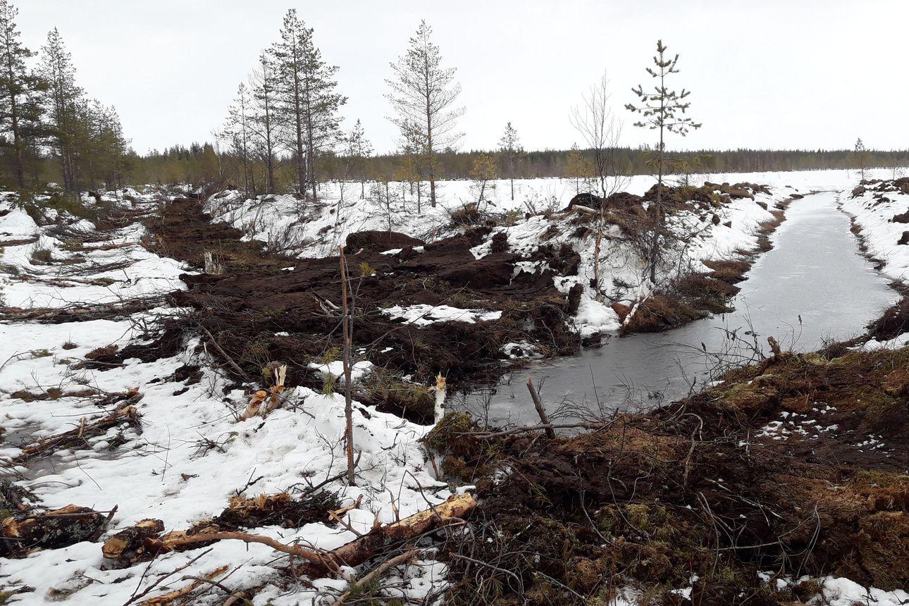 Metsähallitus ennallistaa pienvesistöjä – yksi kohteista Taivalkoskella