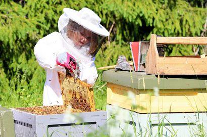 Mehiläisten hoitaminen vaatii kylmiähermoisuutta, jota Sylvialta, 9, löytyy