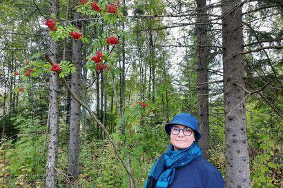 Terveysmetsässä mieliala paranee, stressi vähenee ja immuniteetti kohenee – Oulun seudulla monia mahdollisuuksia toimintaan