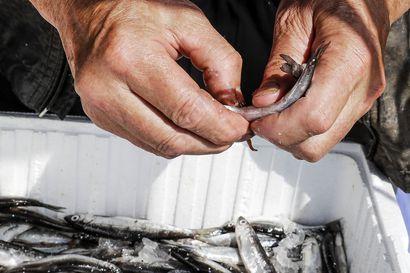 Lukijalta: Rovaniemellä kaivataan lähiruokaa, mutta järvikala ei kelpaa kenellekään