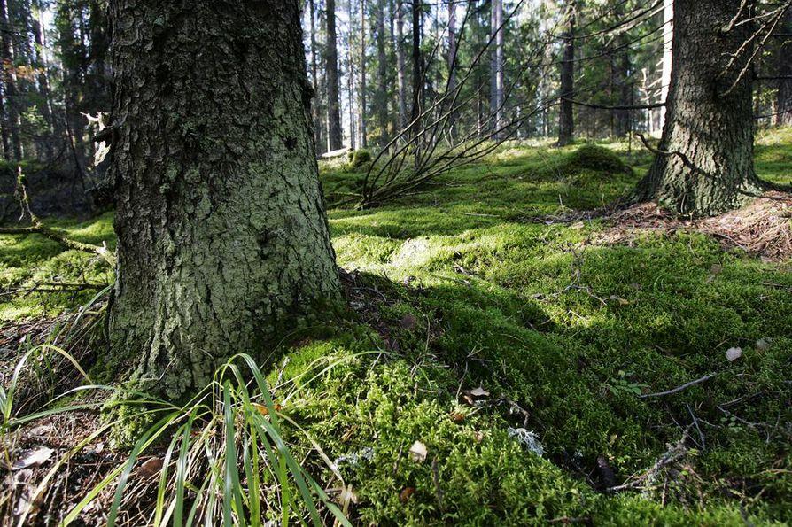 Valtion metsissä tehtävät avohakkuut pitäisi lopettaa ja kieltää lailla, esitetään useiden ympäristöjärjestöjen ajamassa kansalaisaloitteessa.