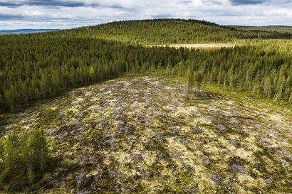Putin ilmoitti kieltävänsä jalostamattoman raakapuun viennin – Venäjän puunvientikielto olisi riski Suomen hiilinieluille ja metsänsuojelulle