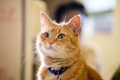 Päivän leffapoiminnat: Kissa lämmittää kylmät kadut tosipohjaisessa draamassa