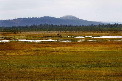 Suoratoisto kuvaa aapasuon elämää vuoden ajan: Kilpiaavan suon elämää voi seurata vaikka vanhainkodista