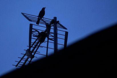 Tutkimus: Linnusto vaikuttaa ihmisten onnellisuuteen jopa yhtä paljon kuin tulot