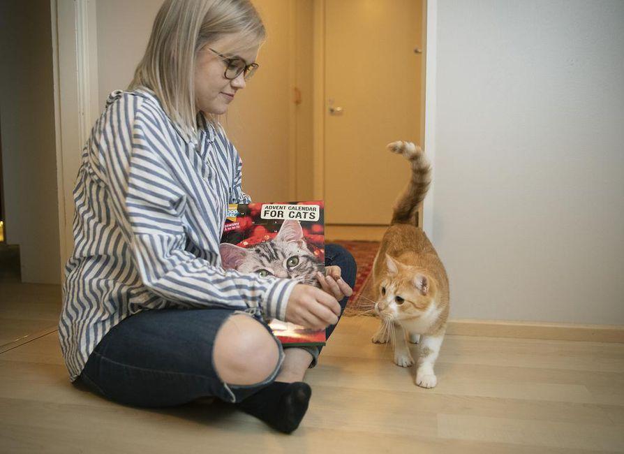 Linda Koskelan Onni-kissa sai tänä vuonna oman joulukalenterin. Viime talvena herkut olivat kovan kysynnän vuoksi loppuneet.
