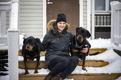 """Etsitkö uutta kotia koirallesi? Kysyimme kokeneen koiranomistajan neuvot onnistuneeseen kodinvaihtoon – """"Koiran kanssa pitää olla useampi tunti joka päivä"""""""