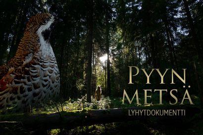 Katso upea uutuusdokumentti lajien selviytymisestä – ohjaaja Suvi Sinervo lähti lapsuutensa metsään etsimään merkkejä uhanalaisesta pyystä
