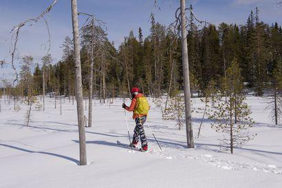 Pajupuronsuon vanhojen metsien suojelualue on luonnon aarreaitta