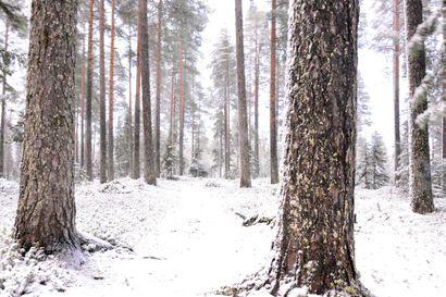 Joko Rovaniemelle tuli pysyvä lumi? – Ei varmaan, vastaa meteorologi