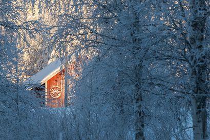 Tammikuun kylmimmät olosuhteet häviävät Metsä-Lapista, monet lajit uhattuna