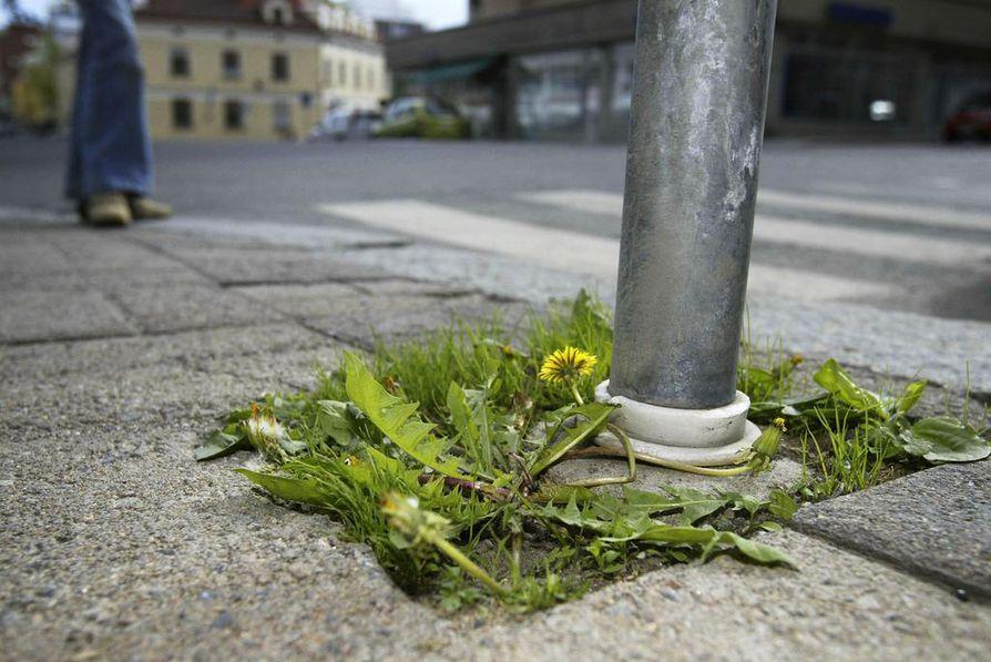 Luonto puskee läpi myös kaupunkiympäristössä.