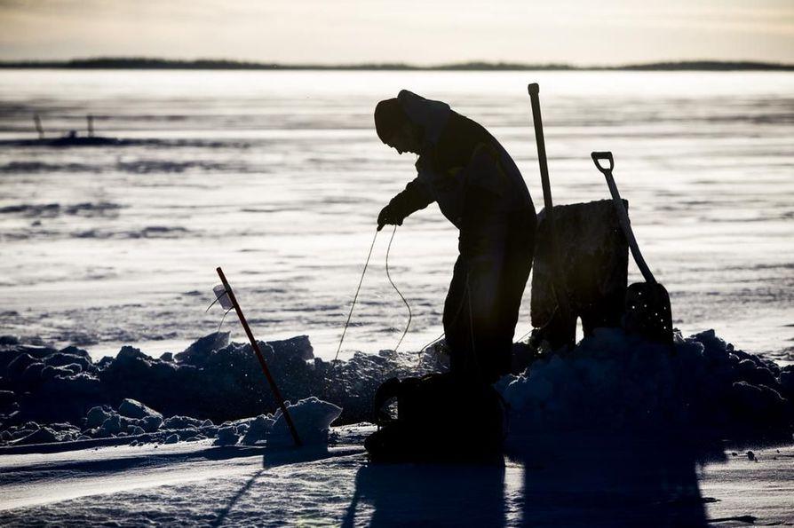 Markku Buckmanilla ja hänen kaverillaan ei ole ollut tänä talvena yhtään verkkoreissua, etteikö saaliina olisi ollut sairas lohta. Pahimpana päivänä on tullut 11 homeen peittämää kalaa. Toimitus kävi verkoilla mukana katsomassa, vieläkö sairaita lohia riittää.