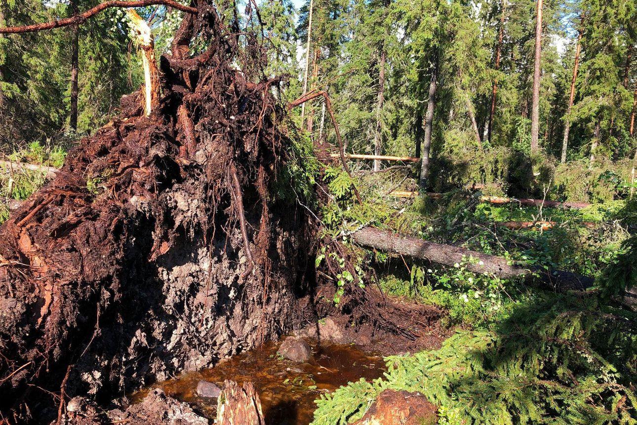 Kuvat: Syöksyvirtaus kaatoi puita Sanginjoentien varressa