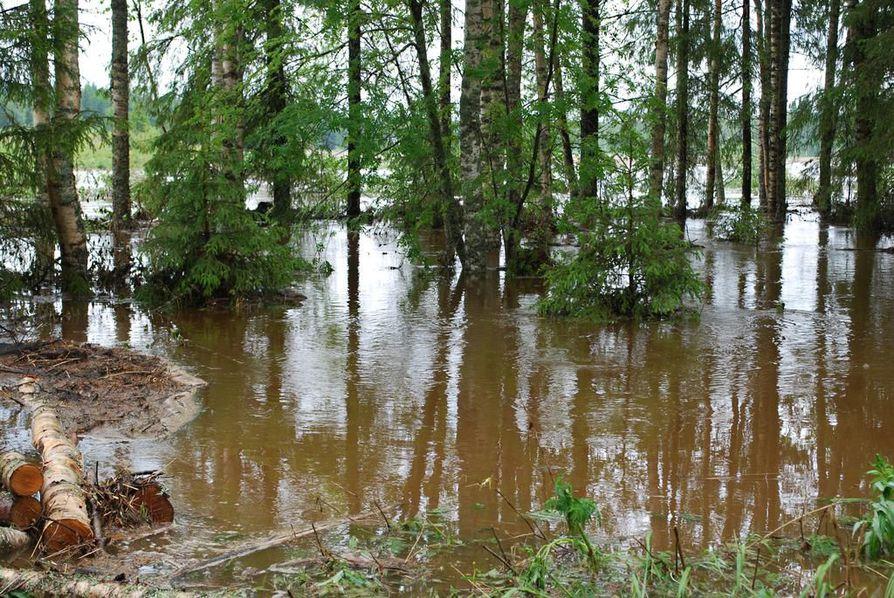 Matkanivassa olleet sadekuurot ovat nostaneet veden pelloille ja metsiin.