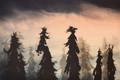 Arvio: Vierailu viidakkoon –Janne Laineen näyttely Aineen taidemuseossa pohtii suhdettamme metsään