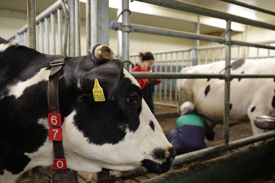 Valvontaeläinlääkärin työhön kuuluu eläinsuojelu-, eläintauti- ja hygieniavalvontaa.