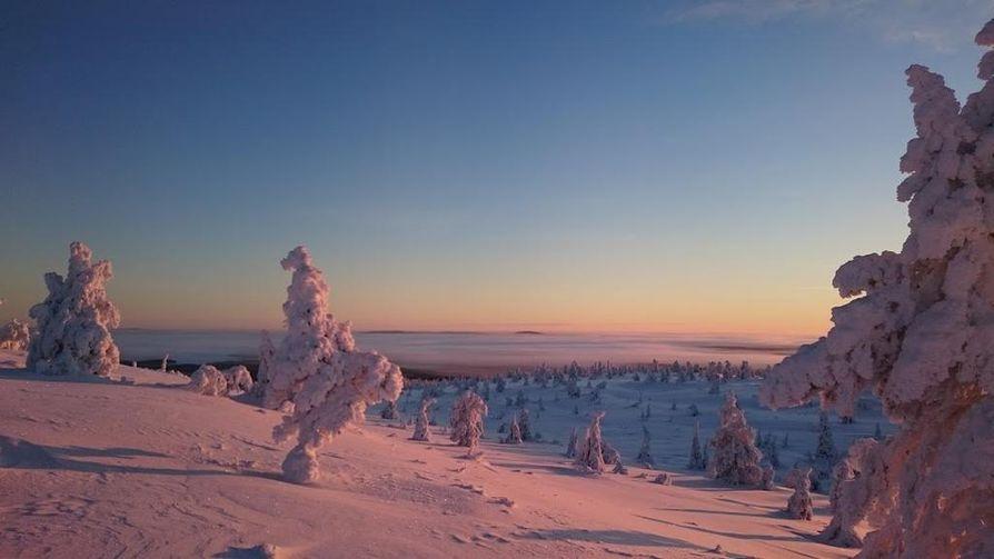 Lapissa otetuissa talvikuvissa korostuvat usein pastellisävyt ja lumiset puut. Kuva on Posion Riisitunturilta.