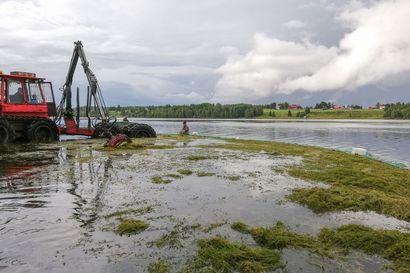 Vesiruttoa poistetaan tällä viikolla Vuotunkijärvestä - kiinnostuneet pääsevät seuraamaan puhdistusoperaatiota