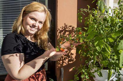 """Parvekkeella voi kasvattaa vaikka mitä, selviää Uuden Rovaniemen lukijoiden kuvista – Anna Kassik sai ensimmäsitä kertaa kirsikkatomaatin kukoistamaan: """"Kerrankin onnistuin!"""""""