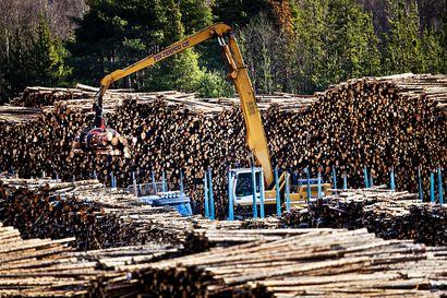 """Metsä Groupin Kemin biotuotetehtaan vaikutus: """"Kasvattaa metsänomistajien myyntituloja noin 70–80 miljoonaa euroa vuodessa"""""""