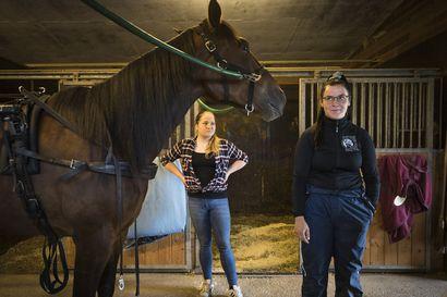 """Oululaiset raviharrastajat Amanda Leinonen ja Aino Sallanko tähtäävät hevosammattilaisen uralle tuoreet ravikortit taskussa – """"Tätä pitää oikeasti tykätä tehdä, tämä on elämäntapa"""""""