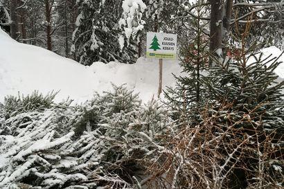 Joko neulaset varisevat? – Rovaniemellä on joulukuusille 20 keräyspistettä