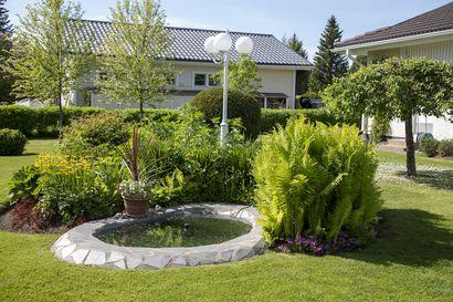Kempeleläinen puutarha ilahduttaa vehreydellään – katso kuvat huolella hoidetusta pihasta