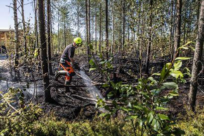 Viikon kuva: Metsäpalovaara