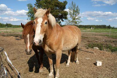 Hevonen tarvitsi apua – Jokipelastus auttoi pinteestä