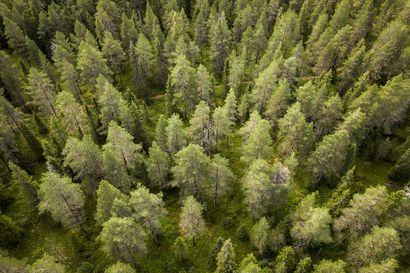 Lukijalta: Metsä meidän jälkeemme
